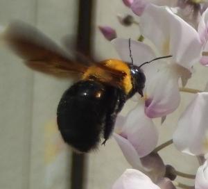 bumble bee japan