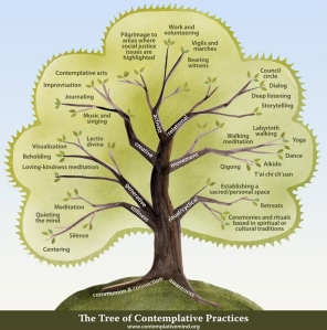 the tree of contemplative practice.